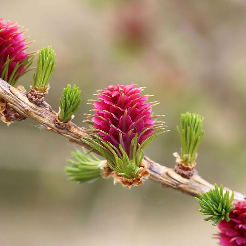 patricia-daza-terapeuta-flores-de-bach-desaliento
