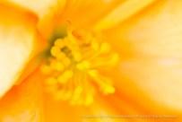 Unsharp: Yellow & Orange Dahlia, 8.27.12