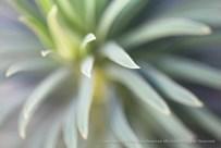 Unsharp: Green Leaves, 12.4.14