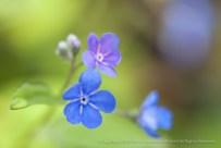 Blue_&_Purple_on_Green,_2.10.15