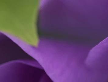 Screen Shot 2017-05-05 at 1.11.02 PM