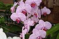 Orchids FL