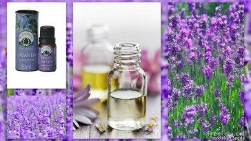 Blog127 - Aromaterapia: Óleo Essencial de Lavanda