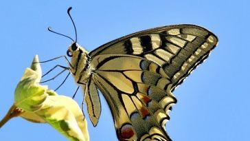 metamorfose - Aceitação e mudança