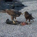 hawks-and-prey-web