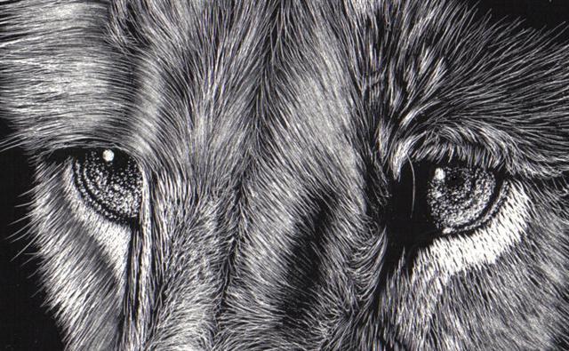 Lion_03_eye_crop (Small)