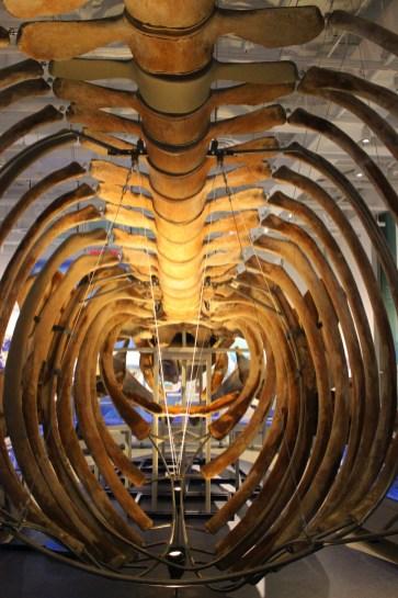 Whalebone cage