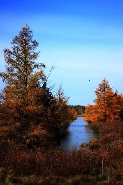 Creek and autumn trees