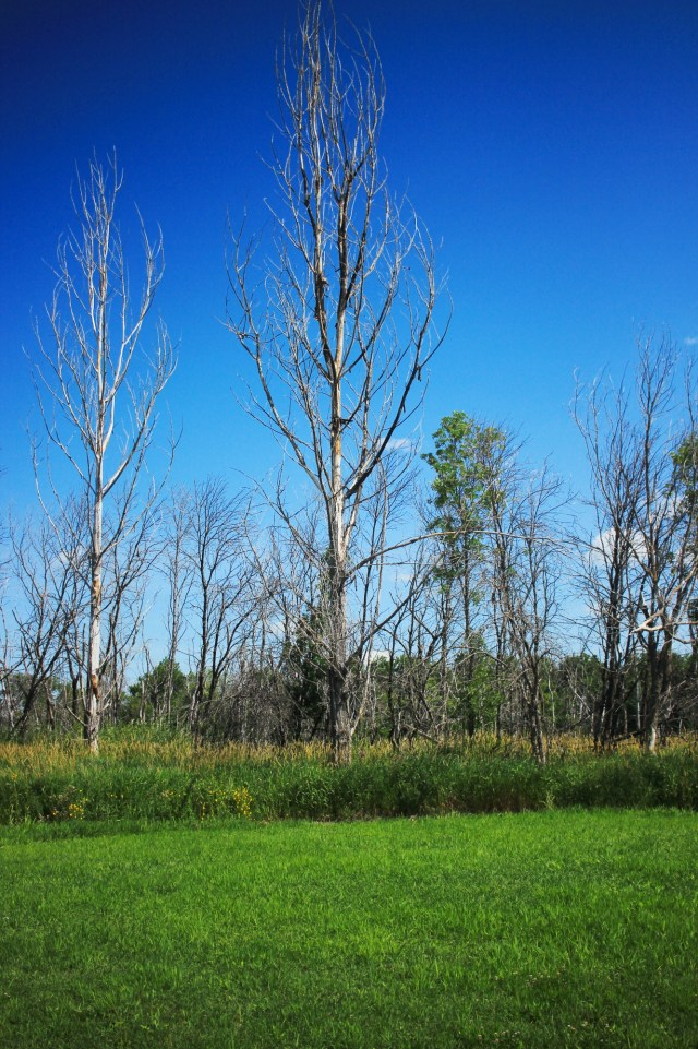 Bone trees