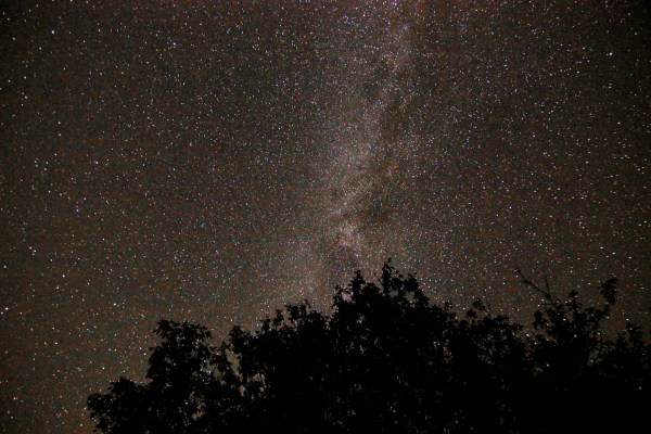 Milky Way from behind a tree