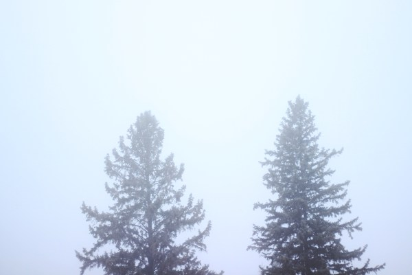 Treetops in the fog