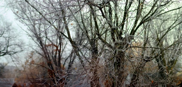 Hoarfrost on tree branches