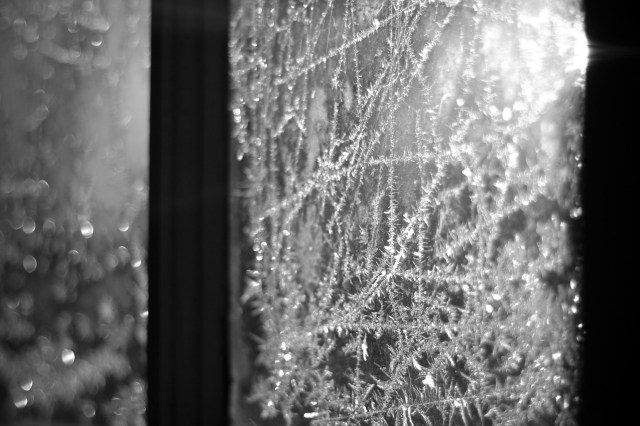 Frost on the windows (b&w)