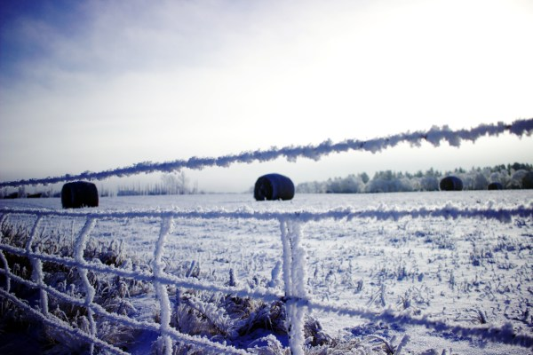 Frosty fence with bales in the background