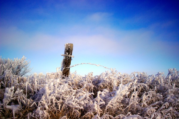 Fencepost and frosty grasses