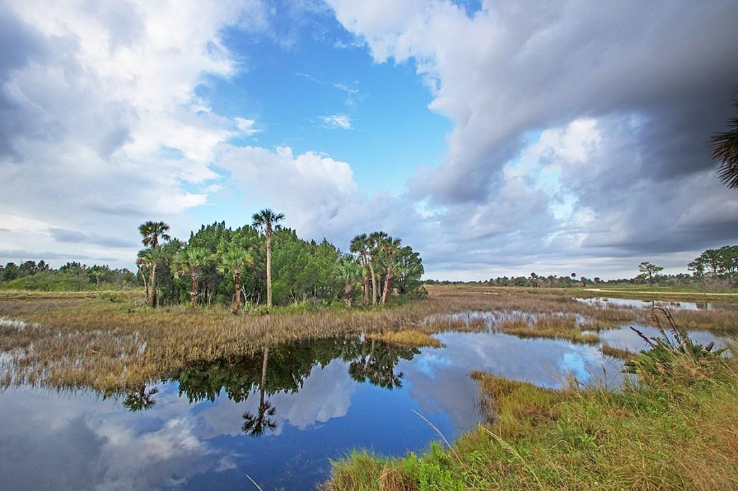 Salt marsh, Merritt Island National Wildlife Refuge, FL. ©Patrick J. Lynch, 2017. All rights reserved.