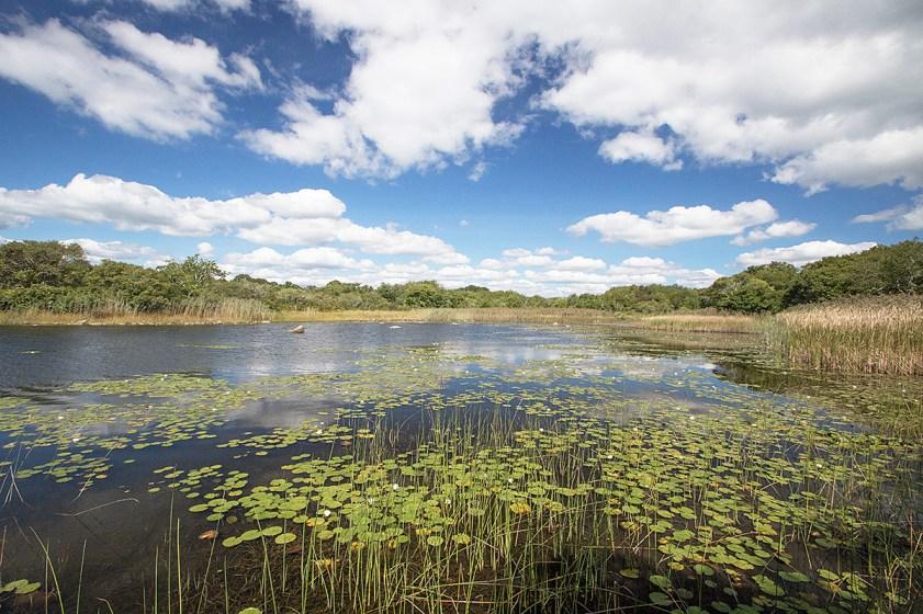 Trustom Pond National Wildlife Refuge, South Kingston, RI. ©Patrick J. Lynch, 2017. All rights reserved.