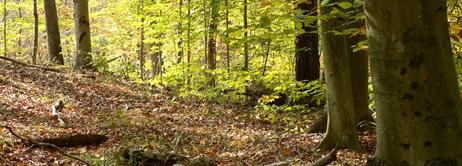 10 Pillars – Woodland