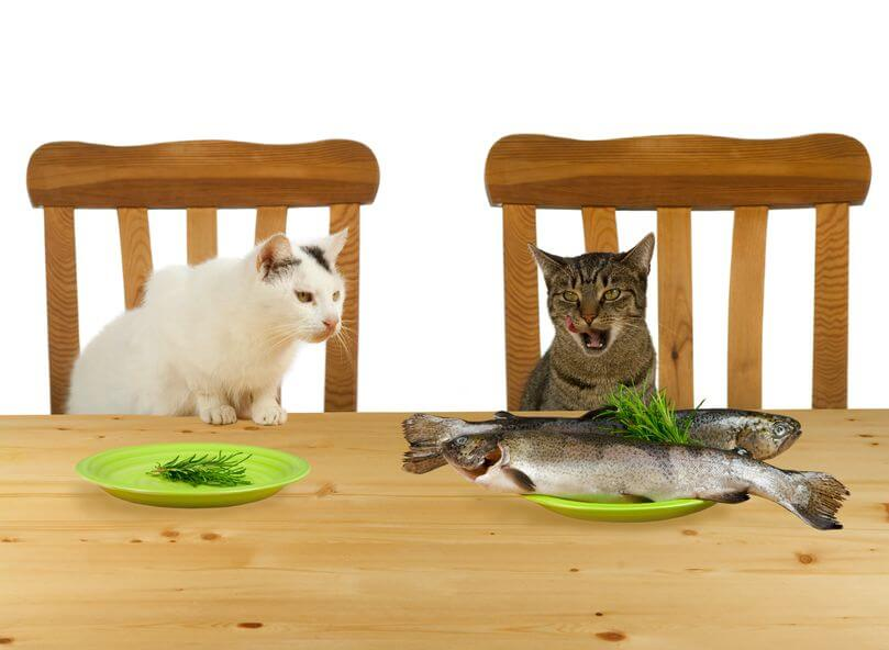 Jealousy image showing two cats with one looking at the plate of another