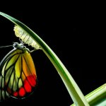 Spiritual renewal showing a butterfly in development
