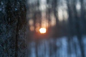 2-fevrier-coucher-soleil-arbre-1-sur-1