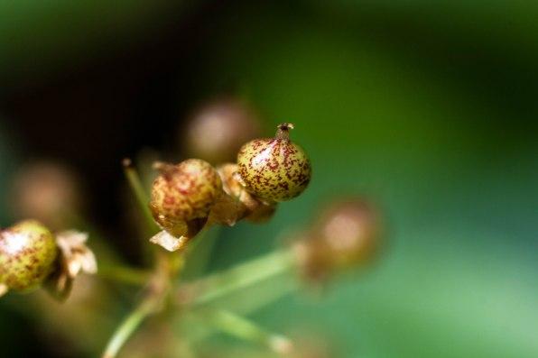 9-juillet-petits-fruits