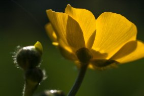 camping-fleur-jaune-soleil