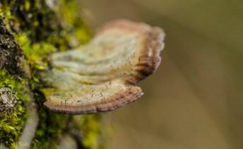 champignon4 (1 sur 1)