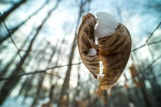 feuilles-neige