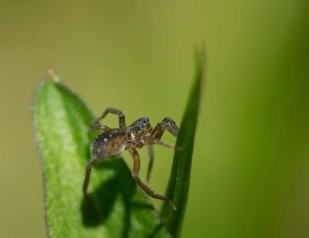 araignée5 (1 sur 1)