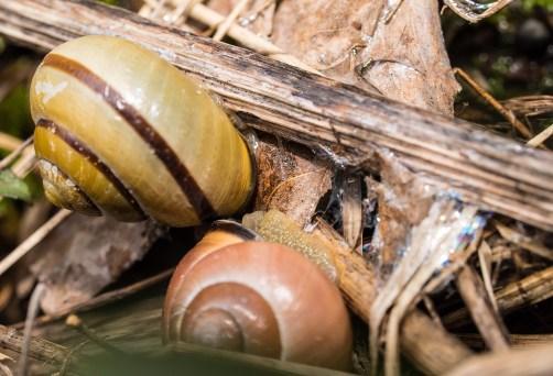 escargots reproduction (1 sur 1)