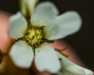 fleur gouttes (1 sur 1)