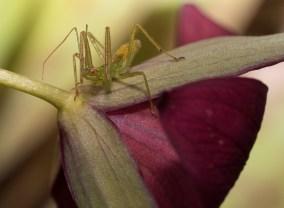 insecte-mystère (1 sur 1)