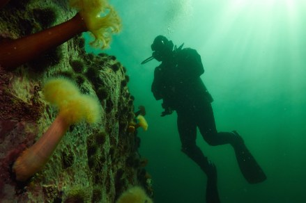 plongeur BC 30 juin