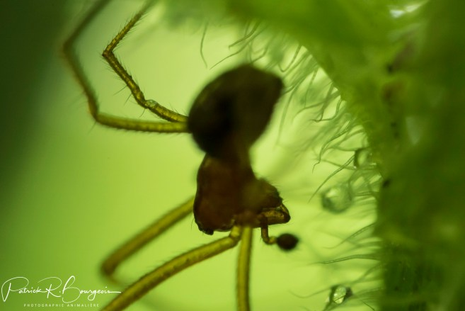 araignée profil (1 sur 1)