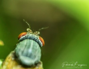 mouche tête (1 sur 1)