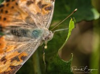 papillon2 (1 sur 1)