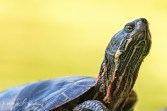 tortue22 (1 sur 1)