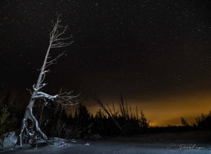 arbre coucher de soleil étoiles