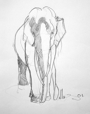Elephant 110x90cm charcoal on paper ©2001