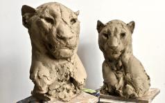 Head of a Male & Female Leopard III in the studio ©2017