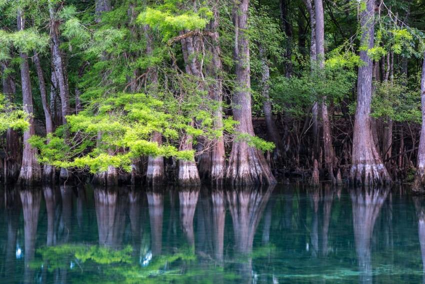 Manatee Spring Bäume USA