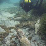 Hallada la primera ánfora en el Mediterráneo con una inscripción de su contenido