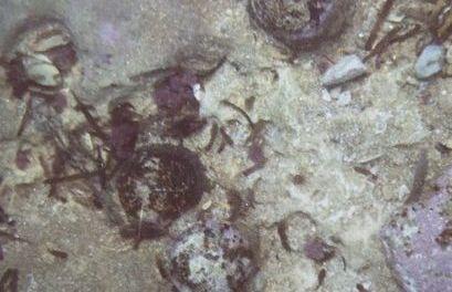 El proyectil de cañón hallado en Dénia es del siglo XVIII y estaba en una costa donde hay 2 buques hundidos