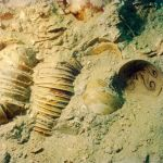 Secrets Of The Sea:  A Tang Shipwreck & Early Trade In Asia