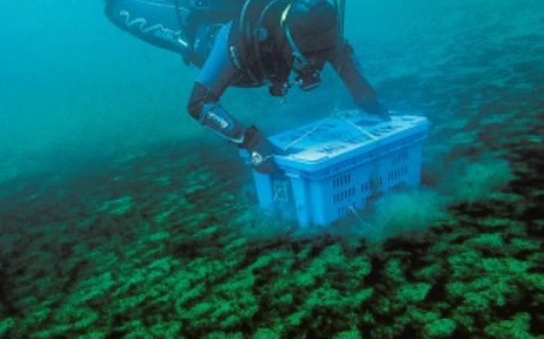 archivo subacuatico