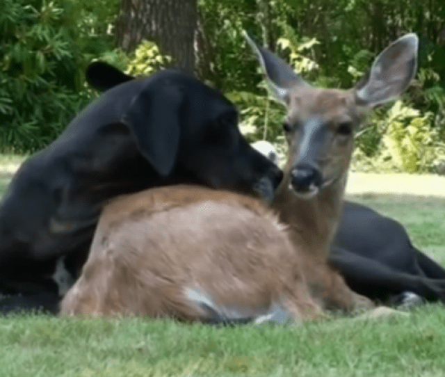 Pretty Uncommon In The Animal Kingdom Particularly When Neither Best Friend Is Human And One Of The Two Is A Completely Undomesticated Whitetail Deer