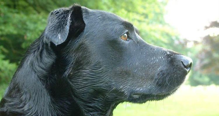 the-dog-again-1253923-640x480
