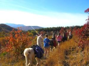 llamas hiking in the smokies