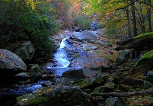 Lynn Camp Prong in the GSMNP